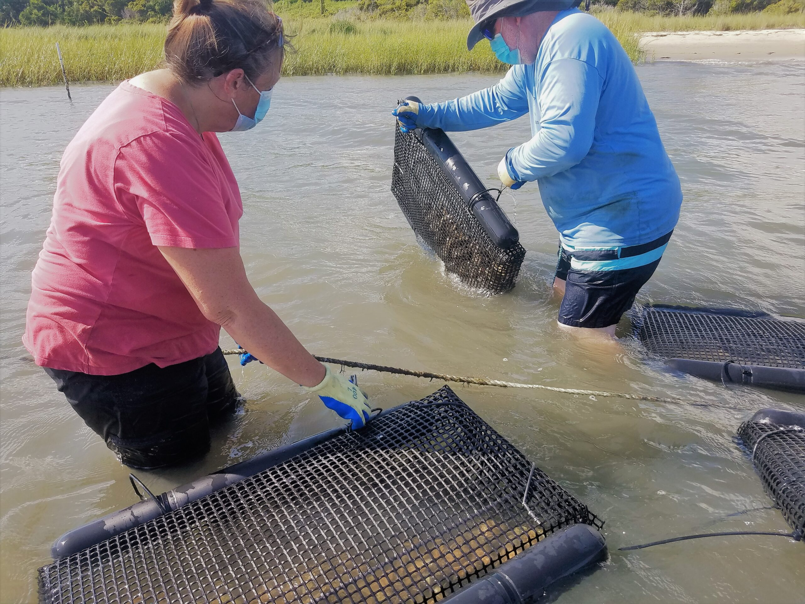 Students deploy floating bags stocked with oyster.