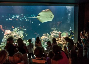 Visitors watch a ray swim in the reef tank at the Greensboro Science Center