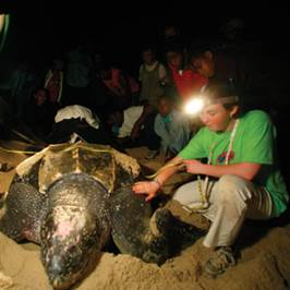 Boy on a beach with leatherback turtle