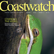 Coastwatch Spring 2016 cover, green tree frog