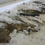 Fish on ice in a fish market.