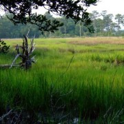 Trees and grass in marshy area