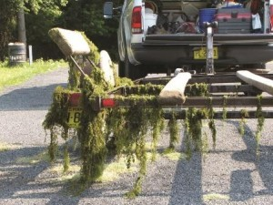 Hydrilla is easily spread through boats and trailers that are not properly cleaned. Photo by Rob Emens.