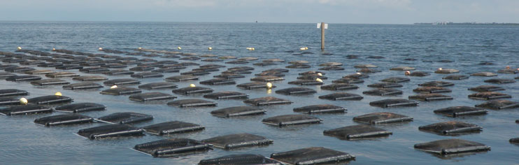 Floating aquaculture cages in water