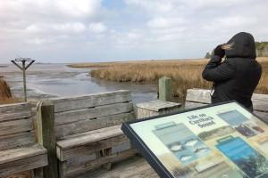 Person looking through binoculars on Currituck Banks marsh