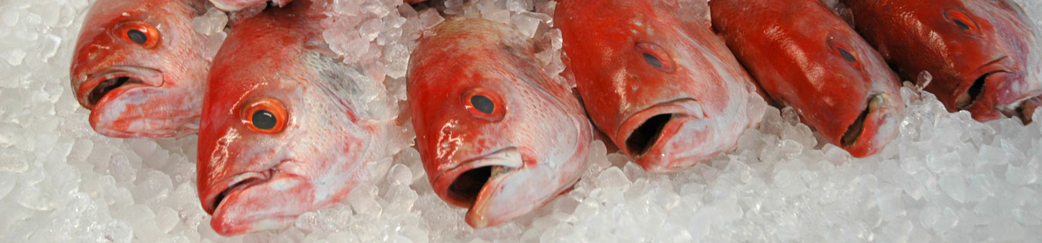 Row of red fish on ice at the fish market