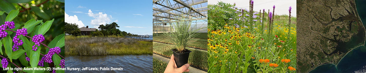 This banner image features, from left to right, a photo of a plant called American beautyberry; a scene of a house in a tidal creek in North Carolina; a hand holding a potted plant called pink muhly grass; a pollinator garden; and a satellite image of the North Carolina coast.