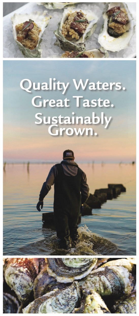 This educational brochure spotlights N.C. cultured shellfish. Order your copy by contacting communications director Katie Mosher at kmosher@ncsu.edu.
