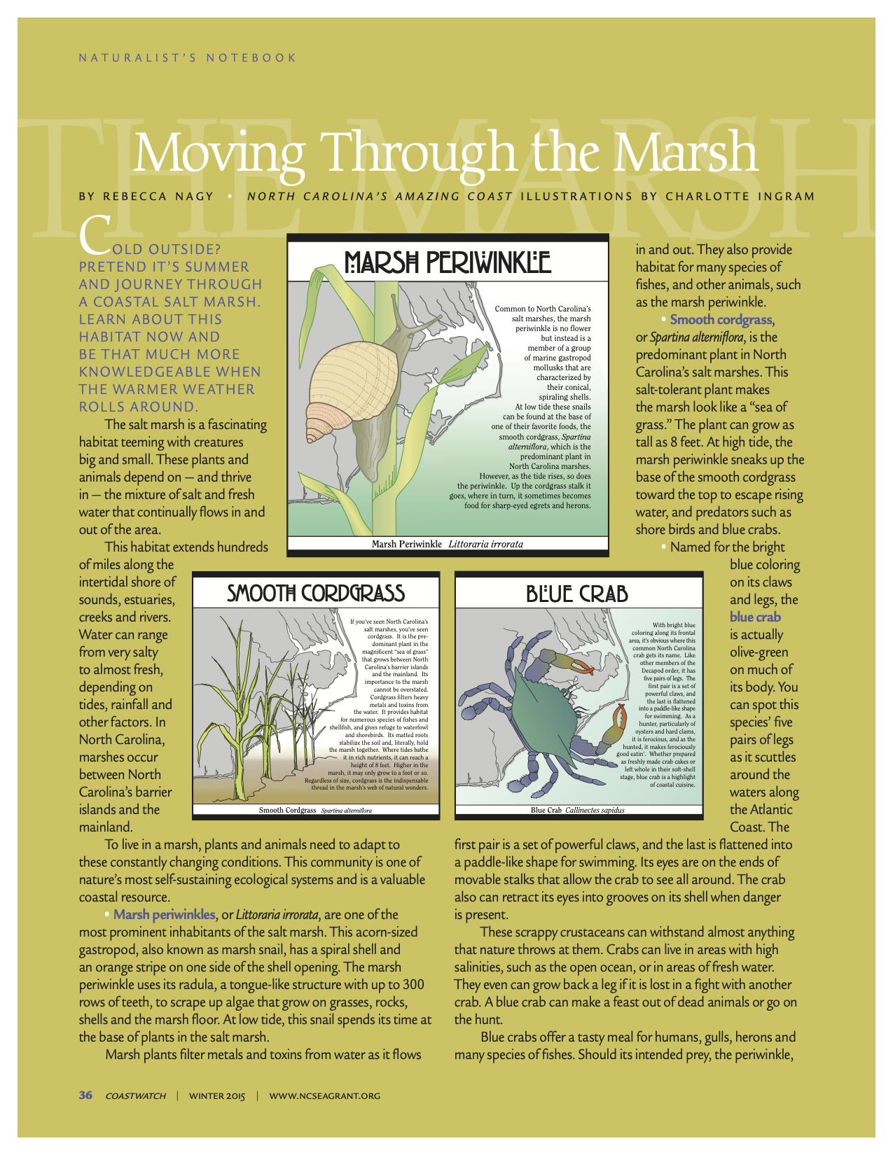 "An image of the first page of the article ""Moving Through the Marsh"""