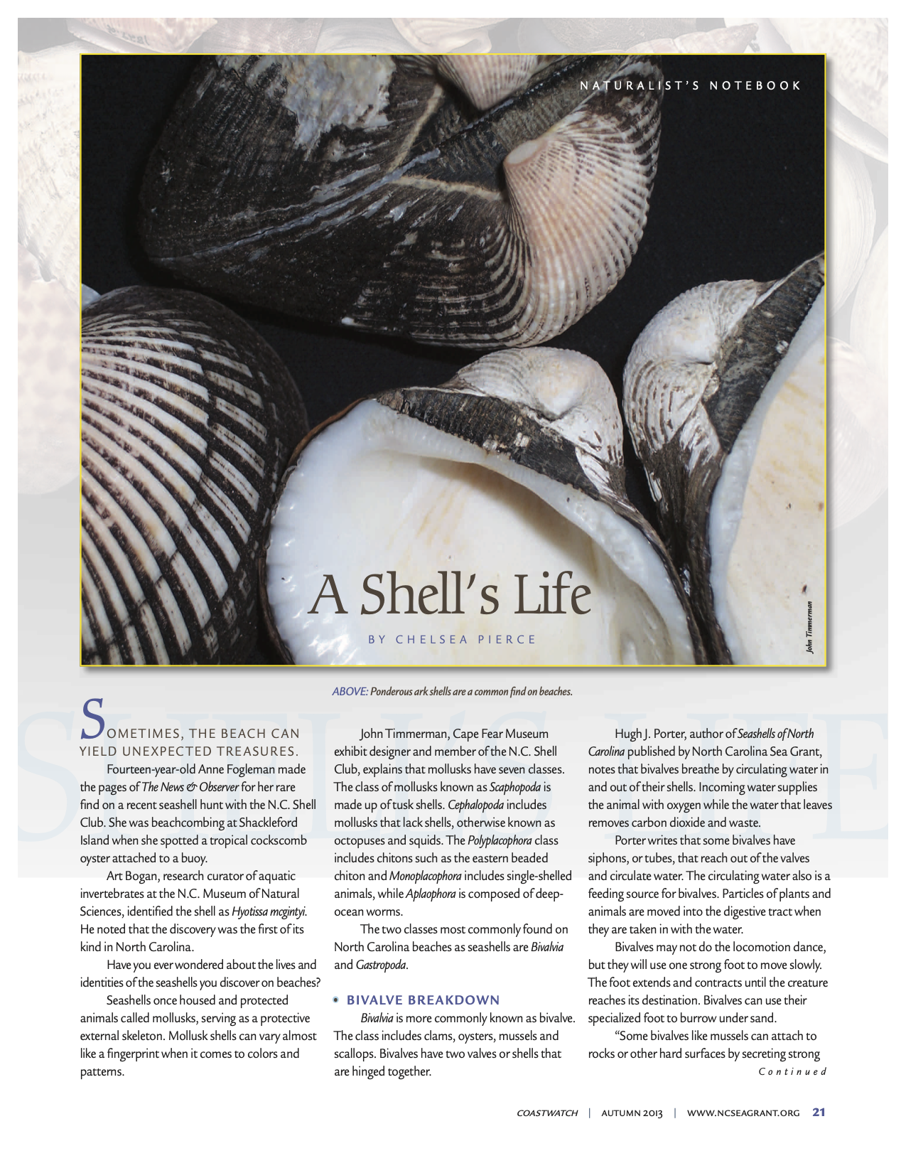 "Image of the first page of the article ""A Shell's Life"""