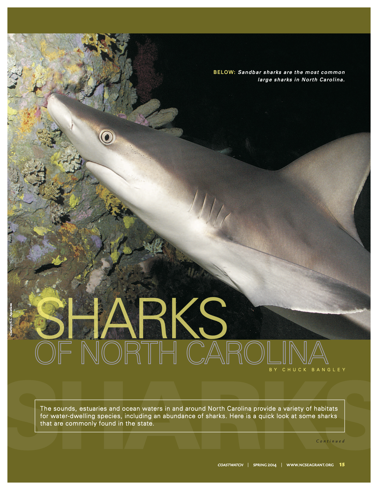 "An image of the first page of the article, ""Sharks of North Carolina"""