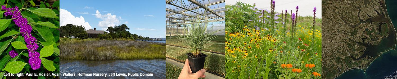 A photo montage of native N.C. coastal plants and coastal scenery