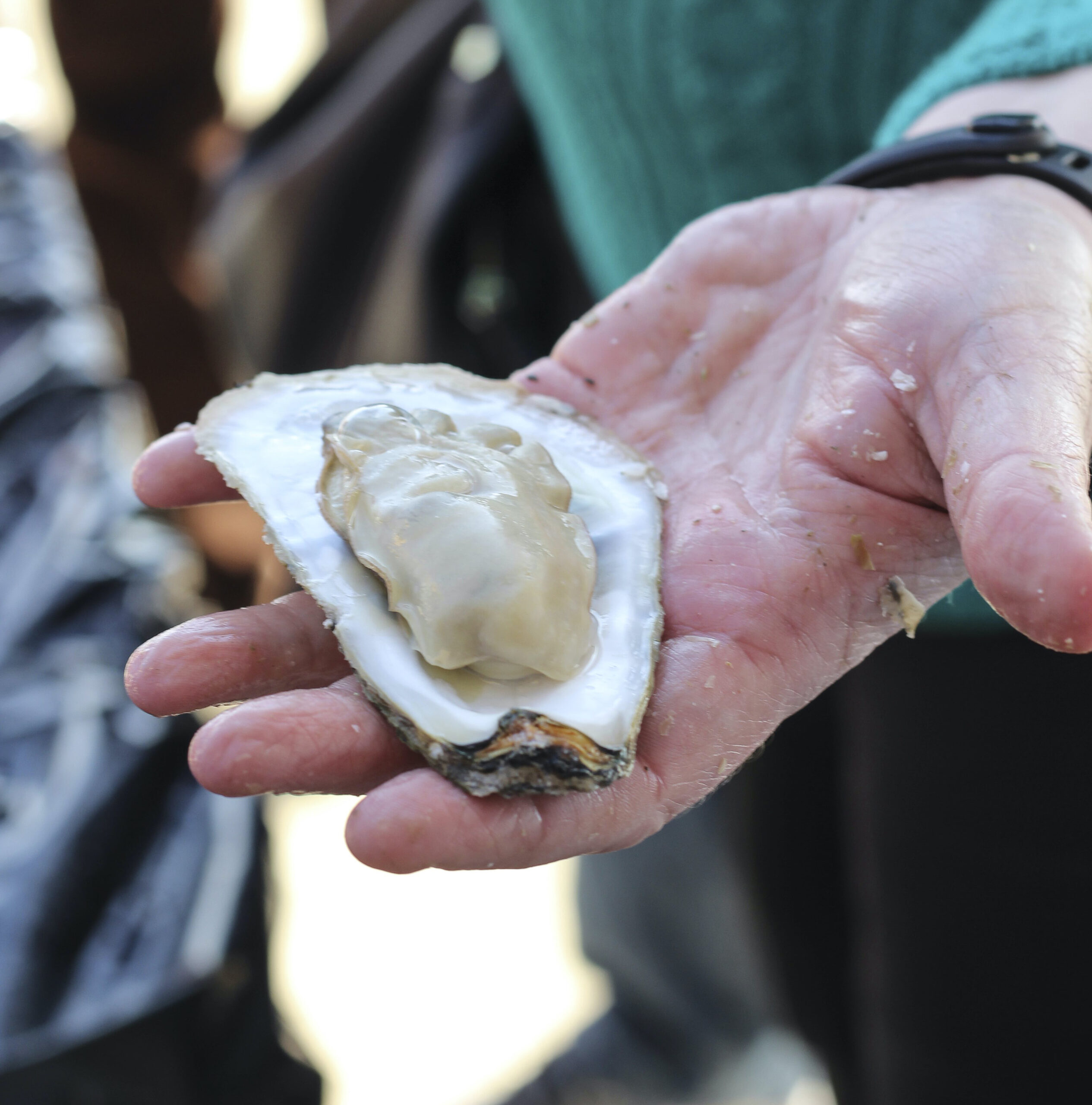 A shucked oyster in someone's hand.